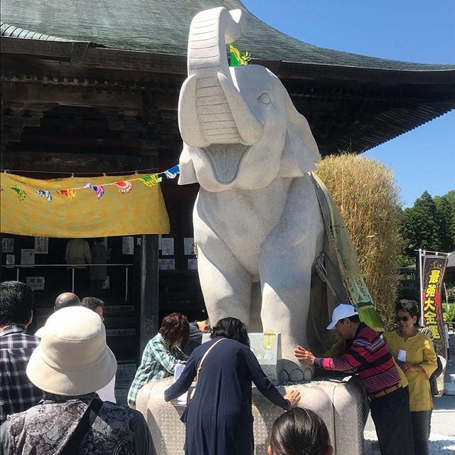 【Instagram】茂原駅からバスで20分位の所にある長福寿寺に来ました。この寺は金運アップ効果が高い寺だそうです。吉ゾウくんの足に触って、金運アップをお願いしてきました。楽しみ(^^)#金運アップ #寺 #願いが叶う